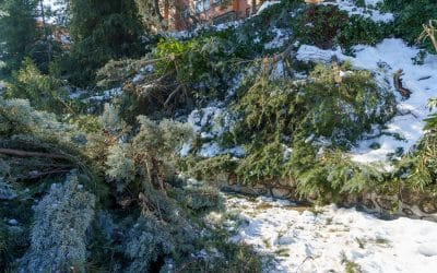 'Filomena' causó daños por valor de unos dos millones de euros en Rivas, según las primeras estimaciones