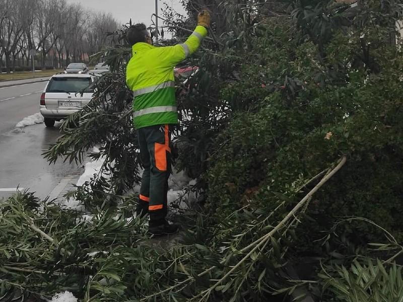 Personal de jardinería de Rivamadrid retirando ramas caídas por la nevada