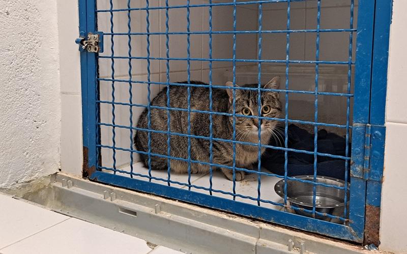 'Lechuza', una gata acogida por Los Cantiles, en Rivas Vaciamadrid