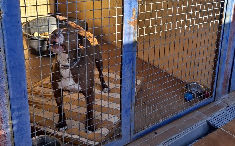 Un perro en el Centro de Recogida de Animales de Los Cantiles, en Rivas Vaciamadrid