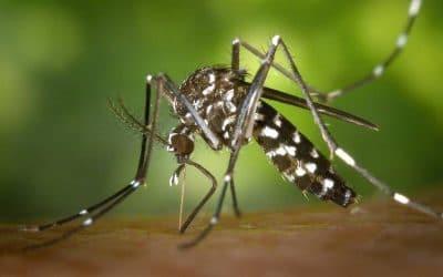 Rivas invertirá más de 20.000 euros para frenar al mosquito tigre