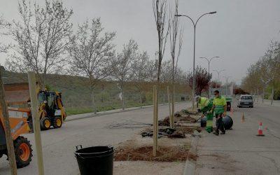 Los 'restauradores' de árboles: recuperando el patrimonio verde de Rivas tras 'Filomena'