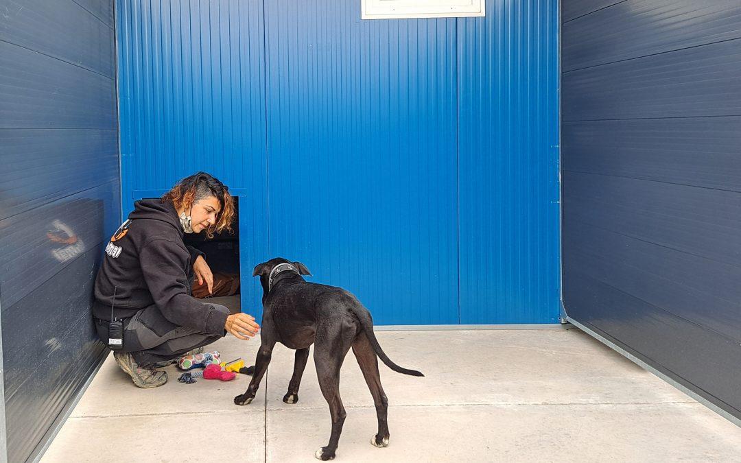 Rivas estrena su nuevo Centro de Protección Animal, pionero a nivel nacional
