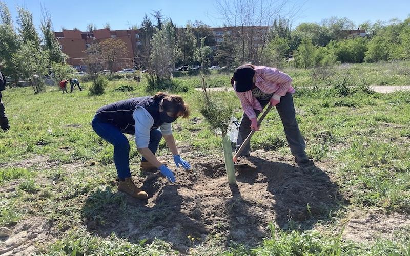 Los vecinos de Covibar plantando árboles