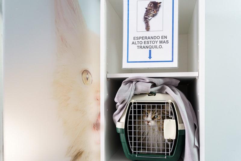 gato clinica veterinaria