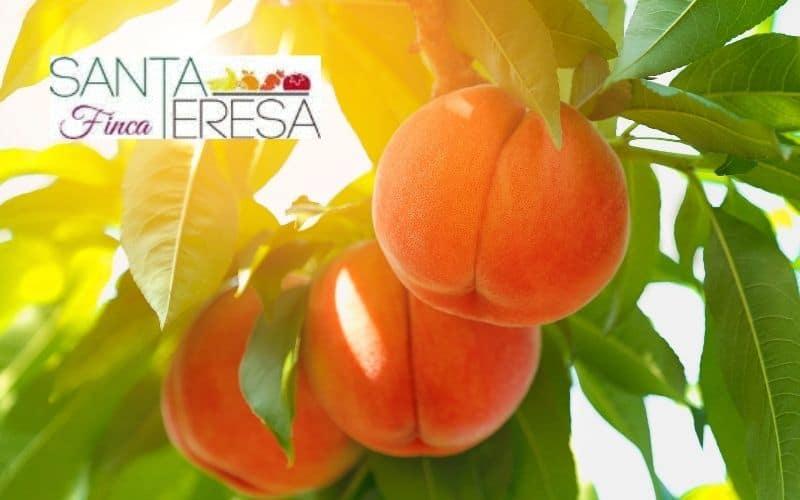 Llega la temporada de melocotones, albaricoques y nectarinas: envío directo a tu casa de Rivas o Arganda con un 10% de descuento