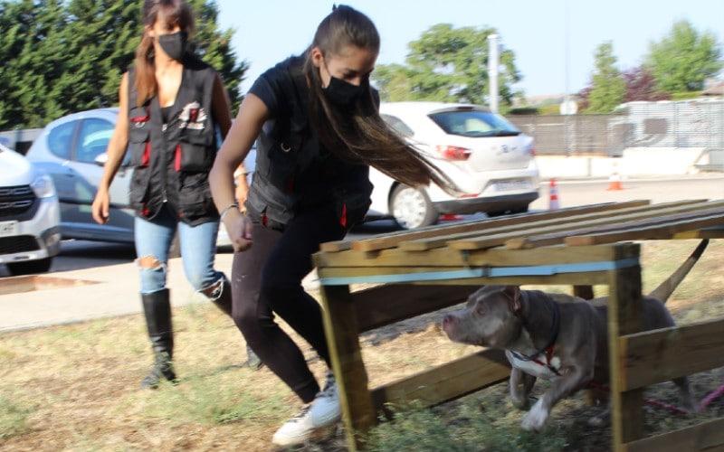 Curso de adiestramiento canino para adolescentes de la Policía Local